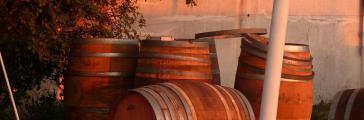 vin corse barrique