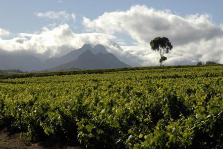 afrique du sud vin